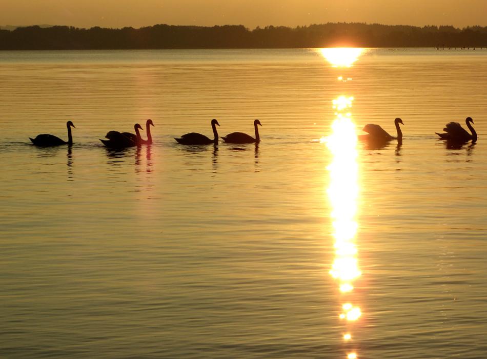 """""""Schau dir mal den Sonneuntergang an... !!"""" [ # 4 ]"""