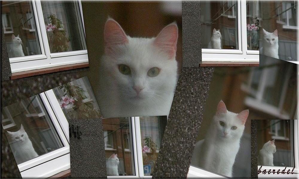 ... schau... Fenster... Kätzchen ...