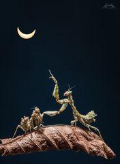 Schau mal, eine Sonnenfinsternis :-)))))))
