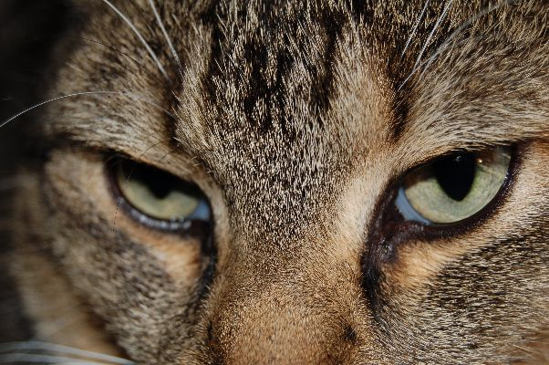 schau mir in die Augen...