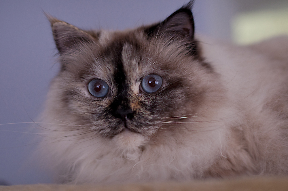 Schau mir in die Augen ......Kleine