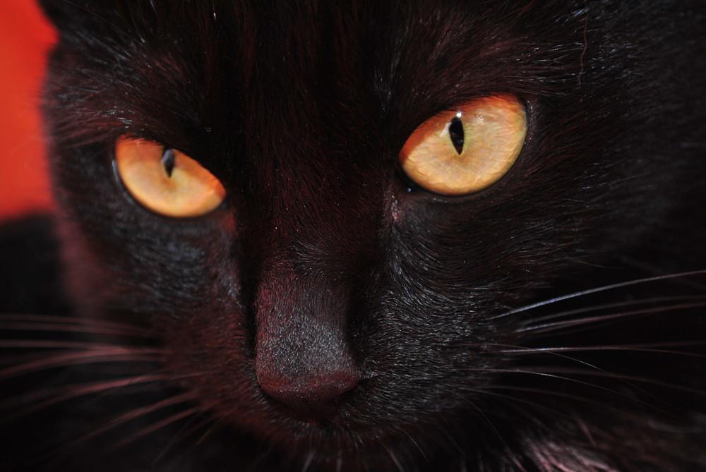 Schau mir in die Augen kleine(r)