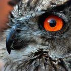 Schau mir in die Augen, Kleines
