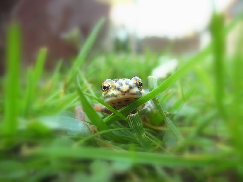 Schau mir in die Augen kleines!!!!