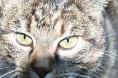 Schau mir in die Augen Kleines (I)