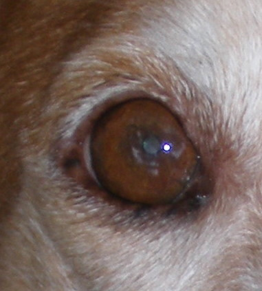 Schau mir ins Auge Baby