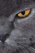 Schau mir ins Auge.......