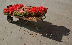 Scheibtruhe mit Balkonblumen!