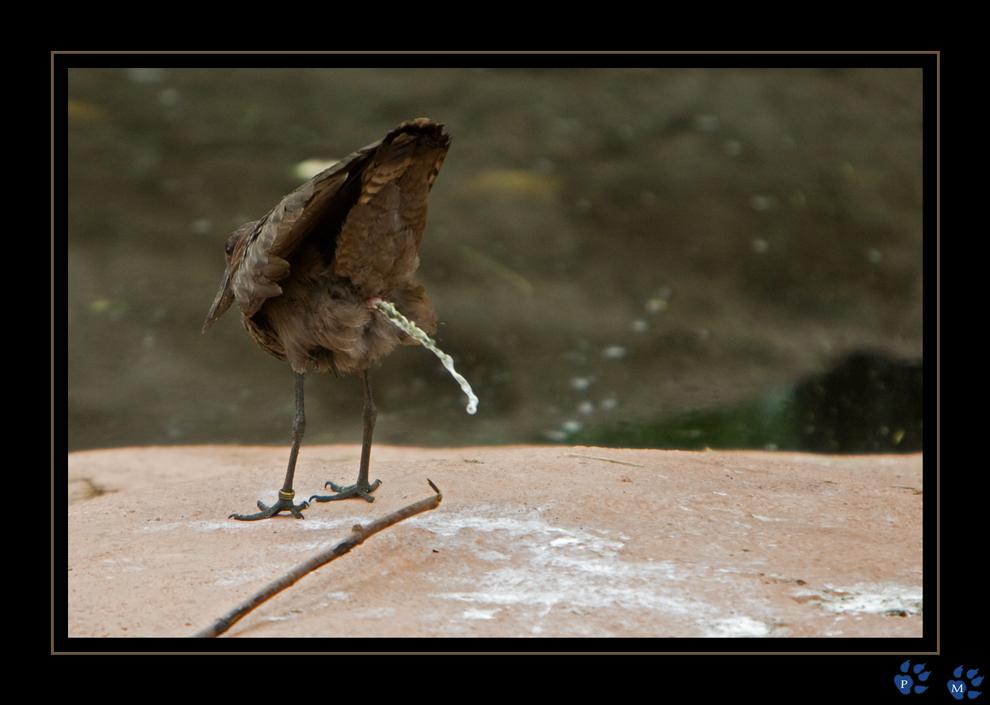 Schei die wand an foto bild tiere zoo wildpark - Fotos an die wand ...