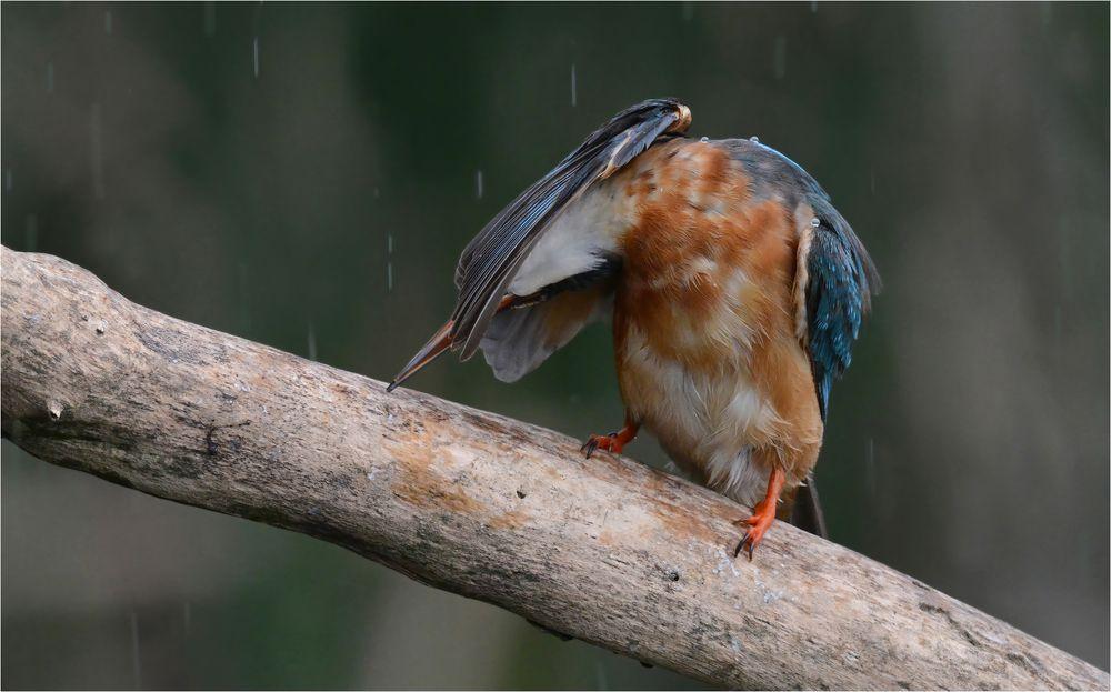 Scheiß Regen