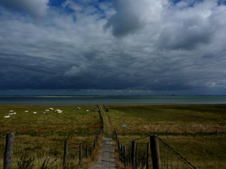Scheldemündung - das Tor zur Nordsee