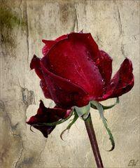 Schenk' Blumen im Leben - nachher sind sie...