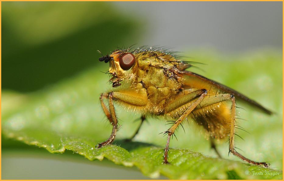 scheues Insekt 1