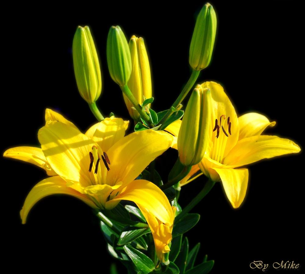 Schicke Blume
