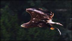 Schicker Flieger !!!