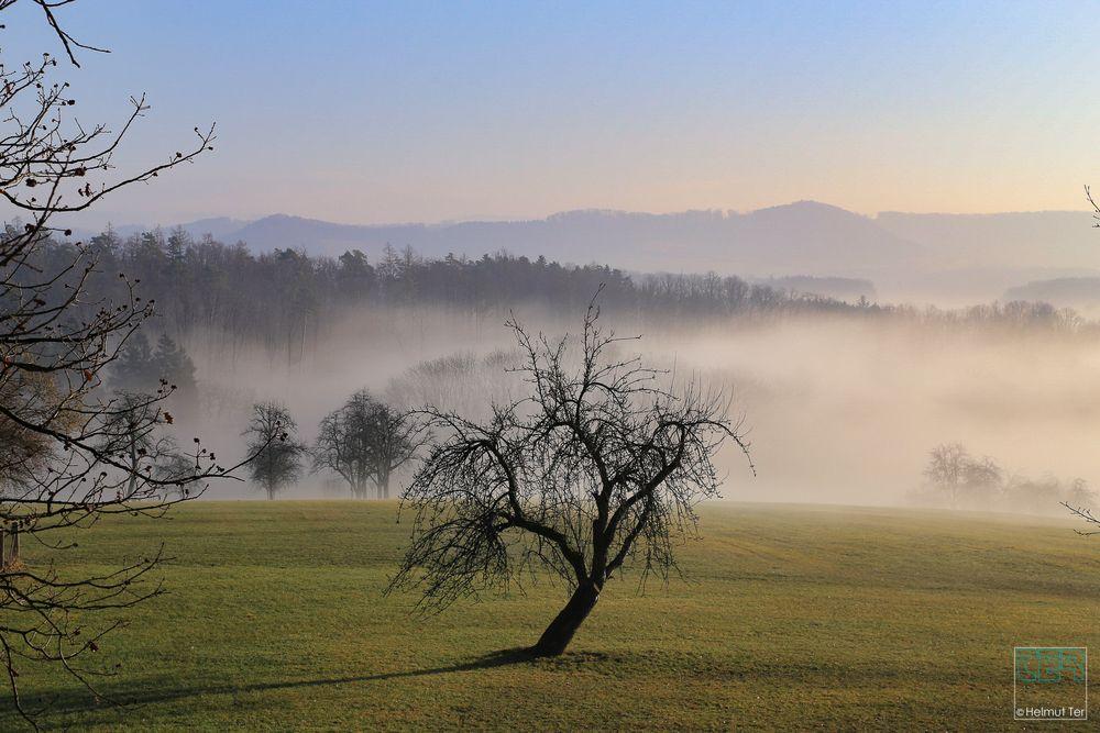 Schiefer Baum im Morgennebel.