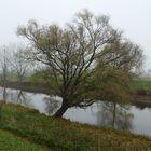 Schiewer Baum