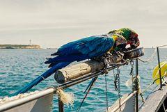 Schiffs-Papageien