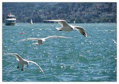 Schiffs- und Flugverkehr am Zürichsee