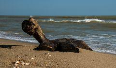 Schildi - die aus dem Meer kam