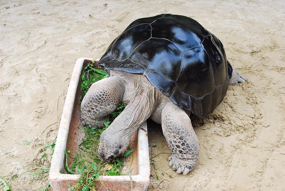 Schildkröte!!!!!