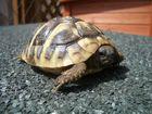 *Schildkröte*