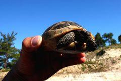 Schildkröte auf der Straße gerettet