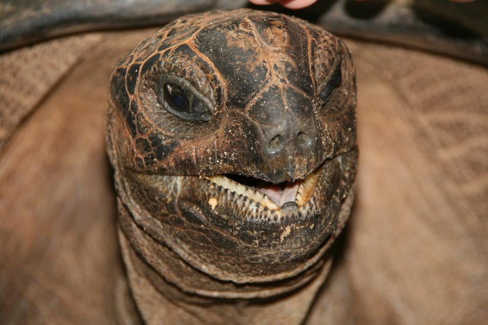 Schildkröte auf Moyenne Island (Seychellen)