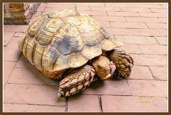 Schildkröte auf Wanderung durch den kleinen Zoo in Rheinberg