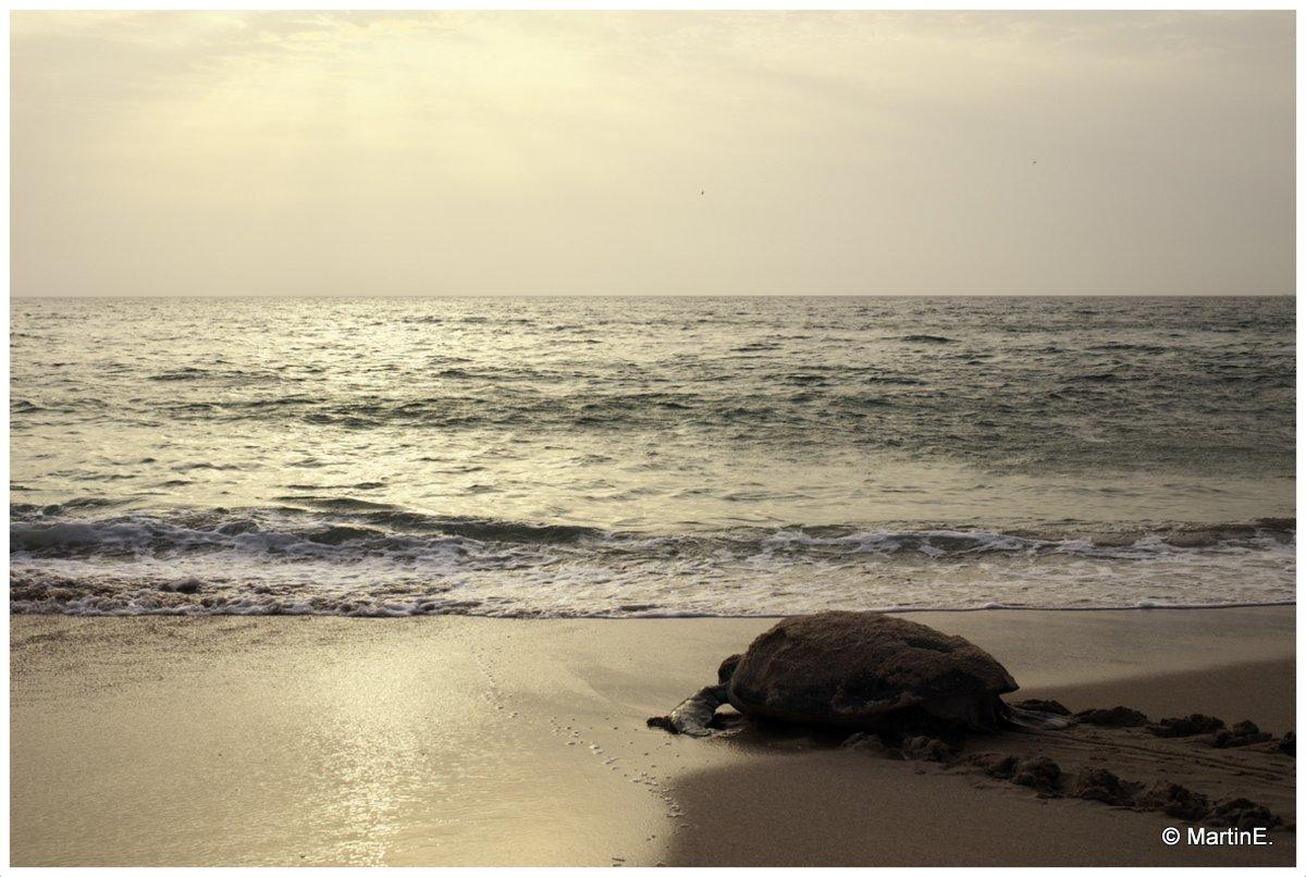 Schildkröte - endlich
