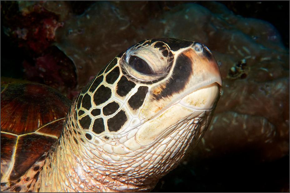 Schildkröte ganz nah ....