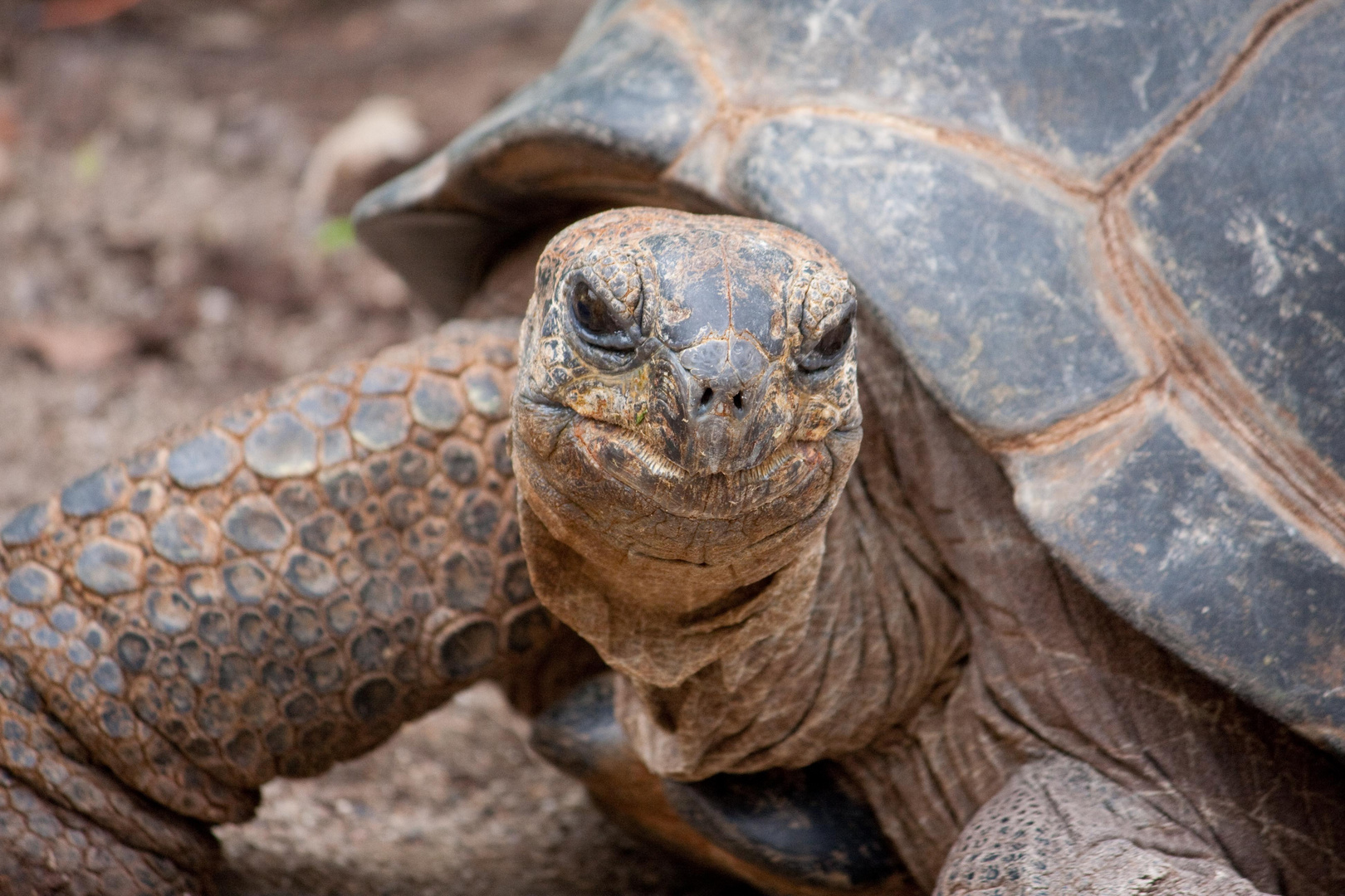 Schildkröte hautnah