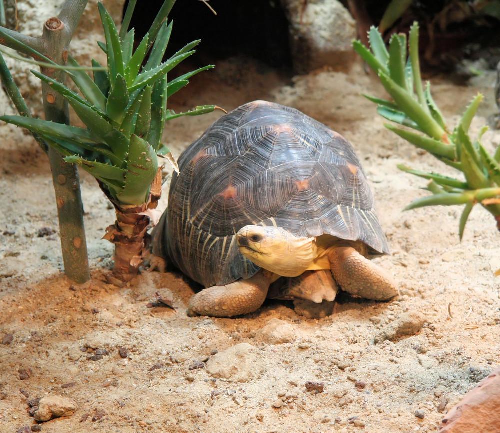 Schildkröte Im Berliner Zoo Foto Bild Tiere Zoo Wildpark