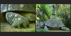 Schildkröte im Monsterwald