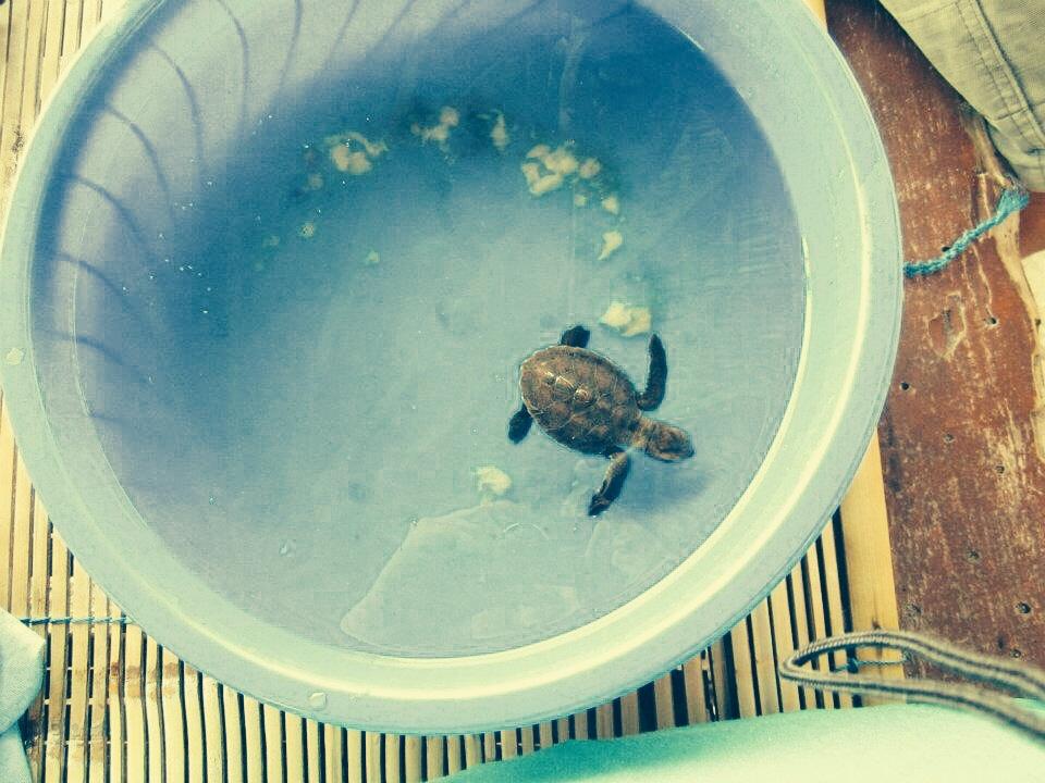 Schildkröte in Bali