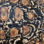 Schildkröte - Natürliche Strukuturen (14)