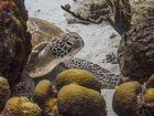 Schildkröte so nah (neue BEA)