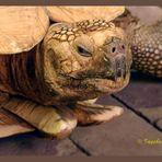 Schildkröte - Terrazoo Rheinberg