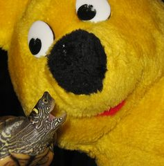 Schildkröten-Angriff