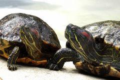 Schildkröten (Neuwieder Zoo)
