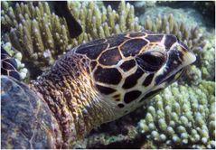 Schildkröten-Portrait