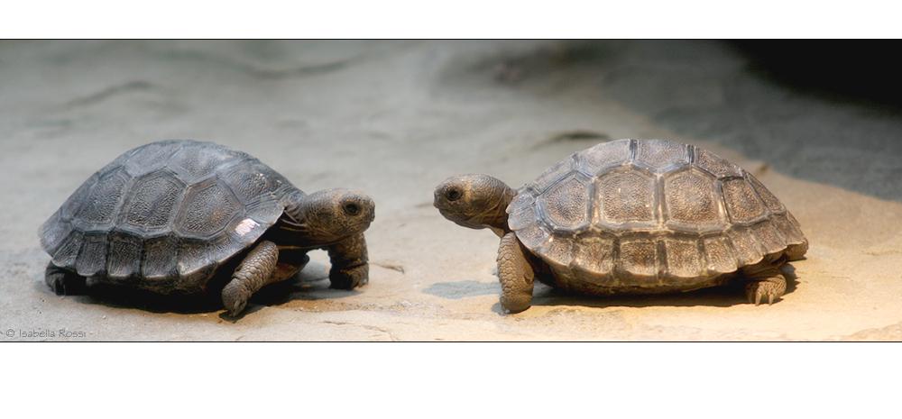 Schildkröten-Tratsch