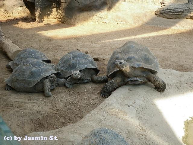 Schildkröten (Zoo Rostock)
