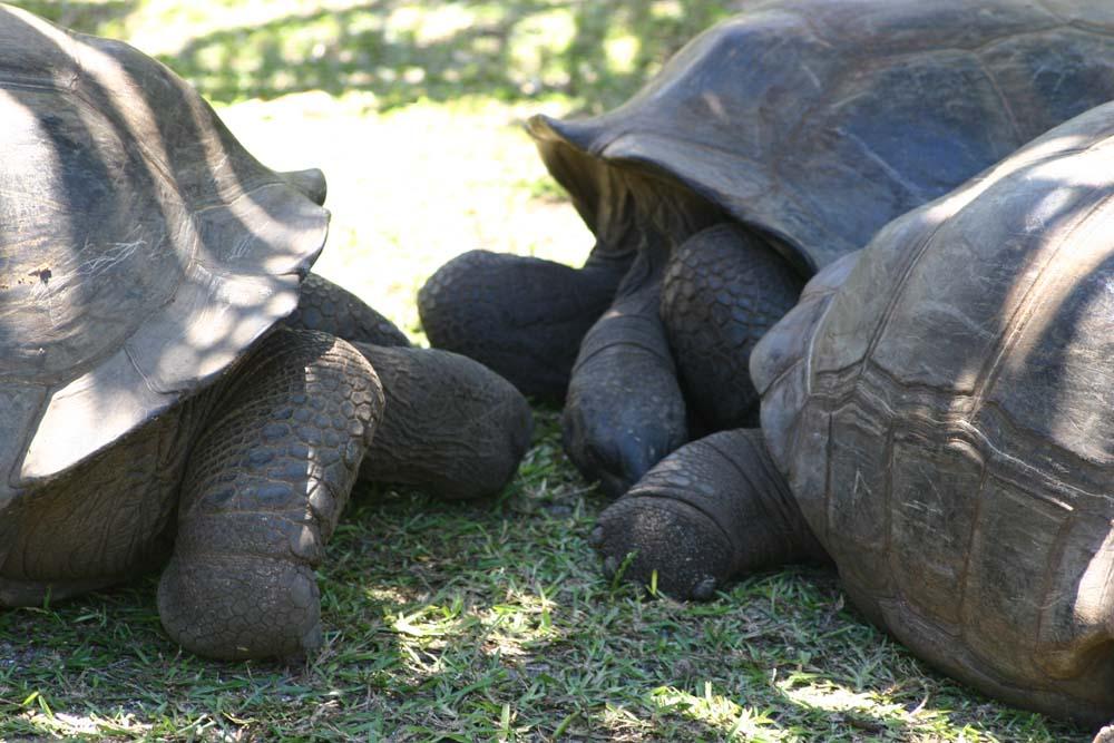 Schildkrötenkonferenz auf den Seychellen