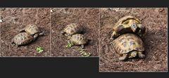 Schildkrötenproduktion im Tierpark Berlin