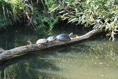 Schildkrötensonnenbank