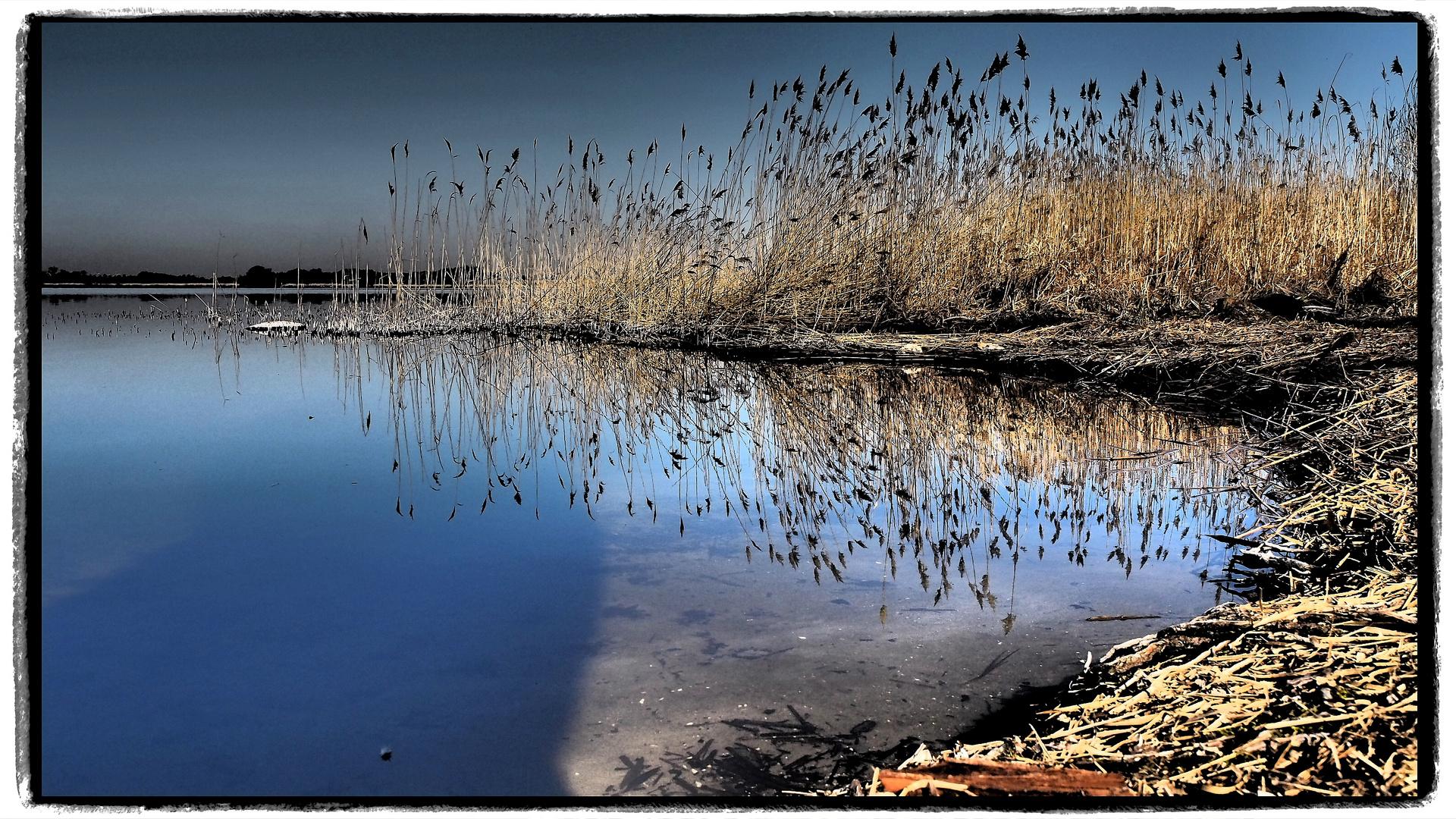 Schilf am Neu Fahrländer See