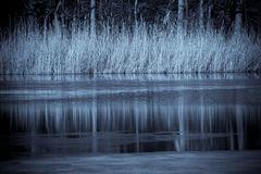 Schilf am Ufer eines Sees