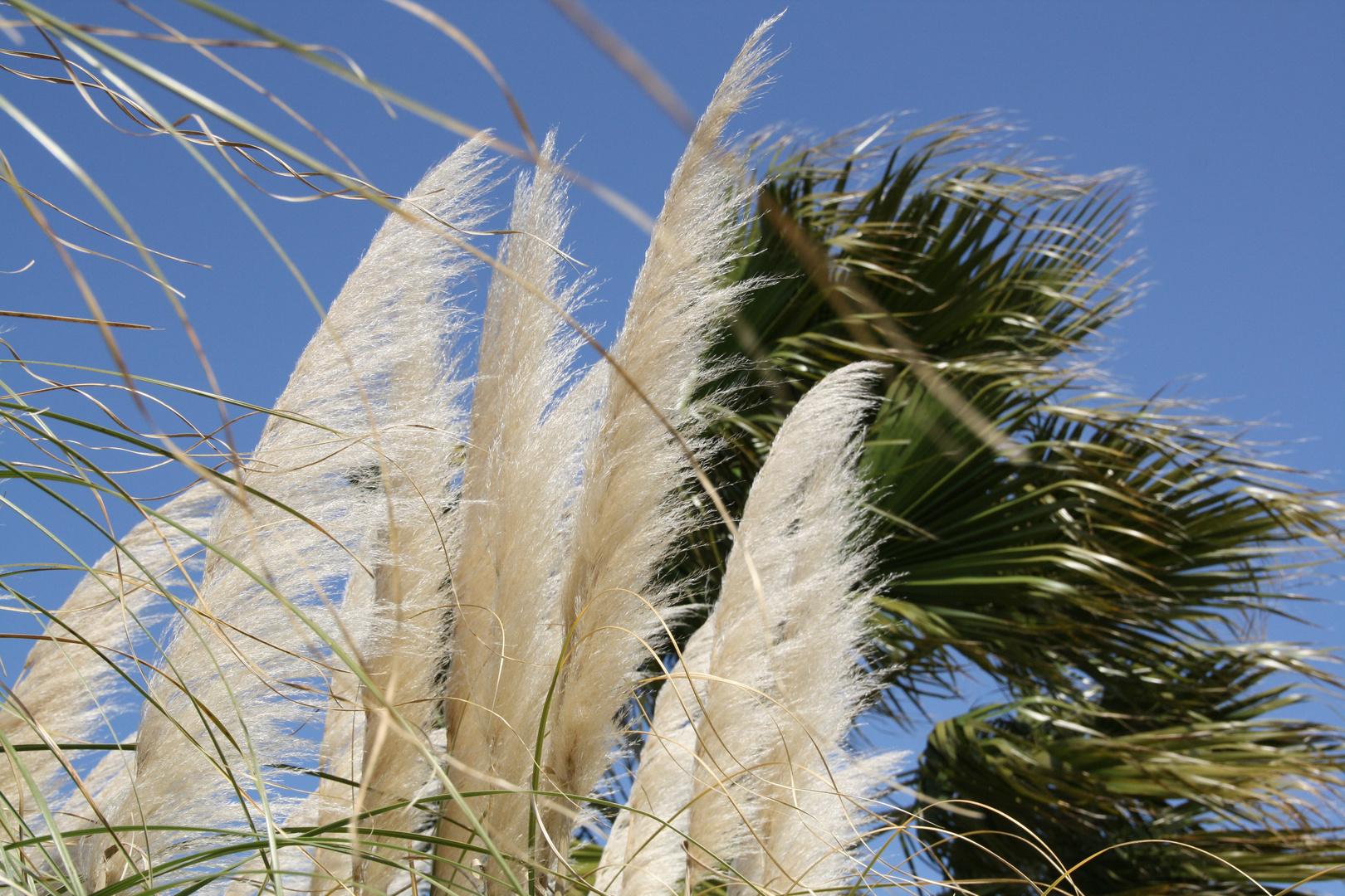 Schilf im Wind 2