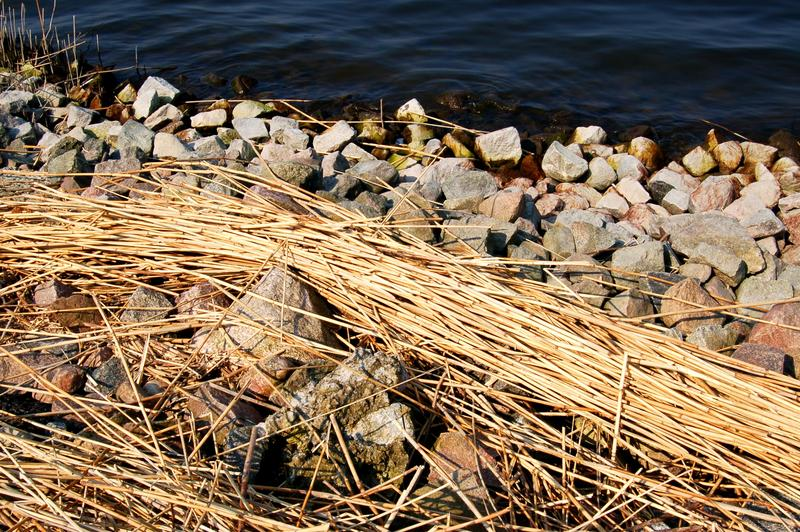 Schilf - Steine - Wasser